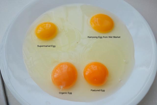 Cara Mudah Mengenali Telur Dari Ayam Yang Tidak Sihat 3