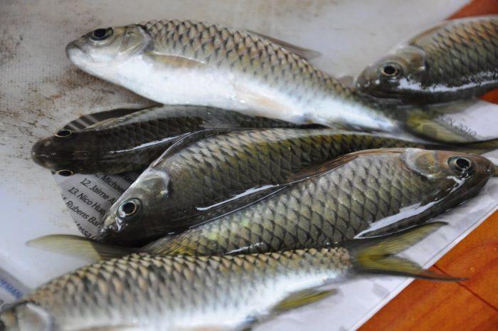 Bau Hanyir Ikan