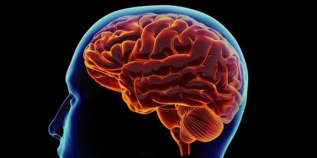 perkembangan otak, minda, perkembangan minda, minda selepas 40 tahun, otak selepas 40 tahun