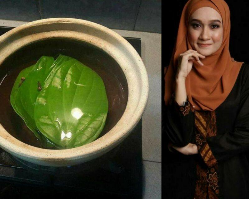 khasiat daun sirih, manfaat daun sirih, daun sirih, kelebihan daun sirih, cara makan daun sirih, cara buat air rebusan sirih, khasiat air rebusan sirih,