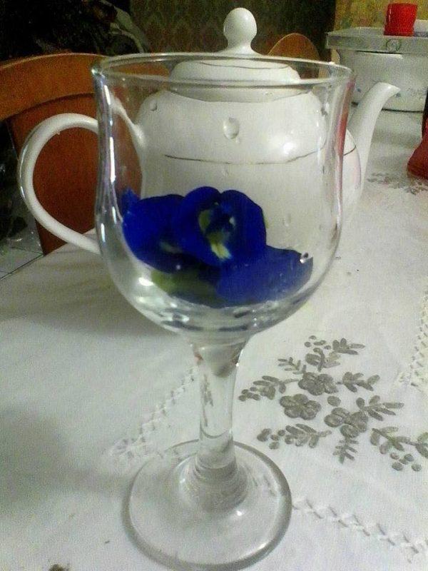 bunga telang, bunga telang tambah lemon, minuman bunga telang, resepi bunga telang, khasiat bunga telang, kelebihan bunga telang