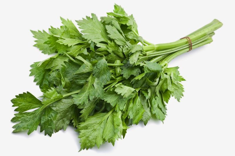 daun ketumbar, daun sup, khasiat daun ketumbar, khasiat daun sup, beza daun sup dan daun ketumbar