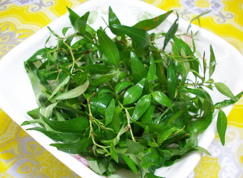 khasiat daun kesum, manfaat daun mesum, kelebihan daun kesum, daun kesum untuk kulit kepala, daun kesum hilangkan kelemumur