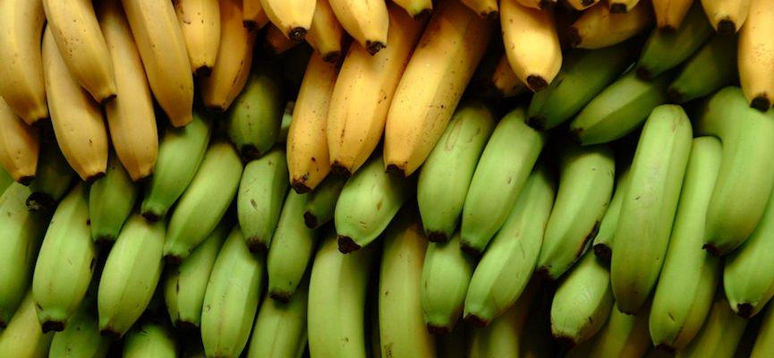 khasiat pisang masak, khasiat pisang mentah, pisang mentah, kelebihan pisang mentah, pisang mentah VS pisang masak