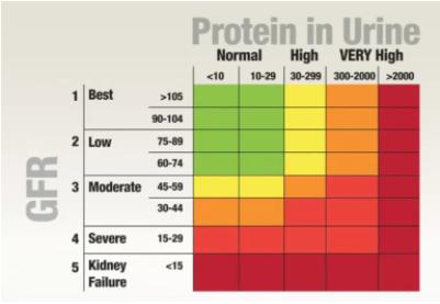 masalah air kencing berbuih, punca air kencing berbuih, air kencing berbuih masalah buah pinggang, protein dalam sarah, masalah protein dalam air kencing