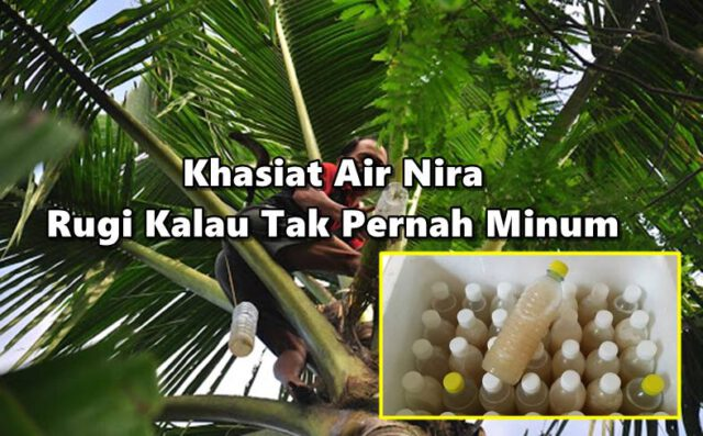 Inilah Khasiat Air Nira, Rugi Kalau Tak Pernah Minum!