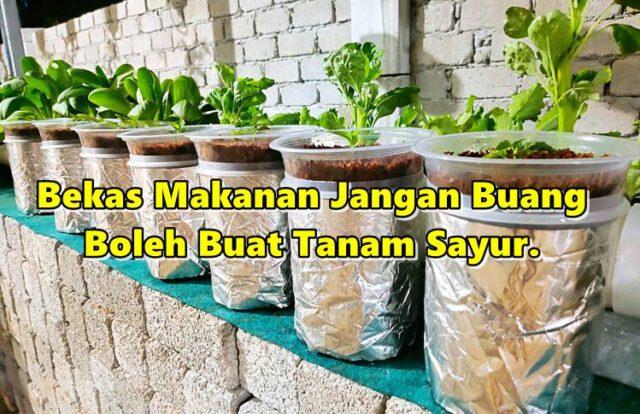 Bekas Makanan Jangan Buang Boleh Buat Tanam Sayur. Guna Teknik Ni, Tak Perlu Siram Dah!