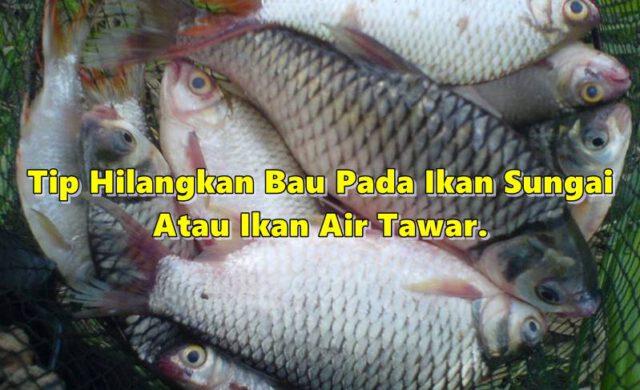 Tip Hilangkan Bau Pada Ikan Sungai Atau Ikan Air Tawar, Baru Selera Nak Makan!